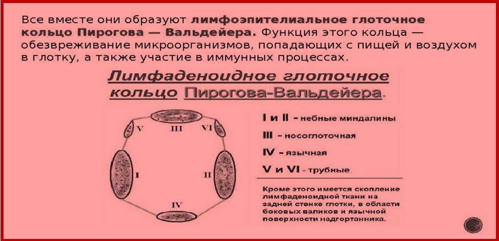 Лимфаденоидное глоточное кольцо