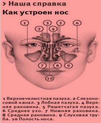 Как устроен нос