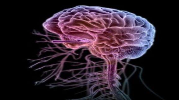 Медицина о нейрорецепторном рефлексе – боли