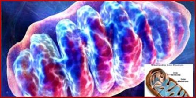 Основной клинический акцент в «Деринате»: гуморальный фактор – интерферон