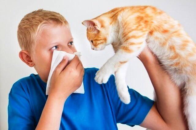 Можно ли удалять аденоиды при аллергии